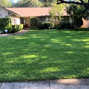 Residential lawn landscaping in San Antonio
